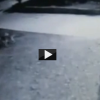Wolves Attacking and Killing Pet Dog Caught on CCTV Footage