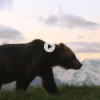 How to Fend Off an Attacking Grizzly Bear